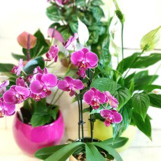 flowering_plant